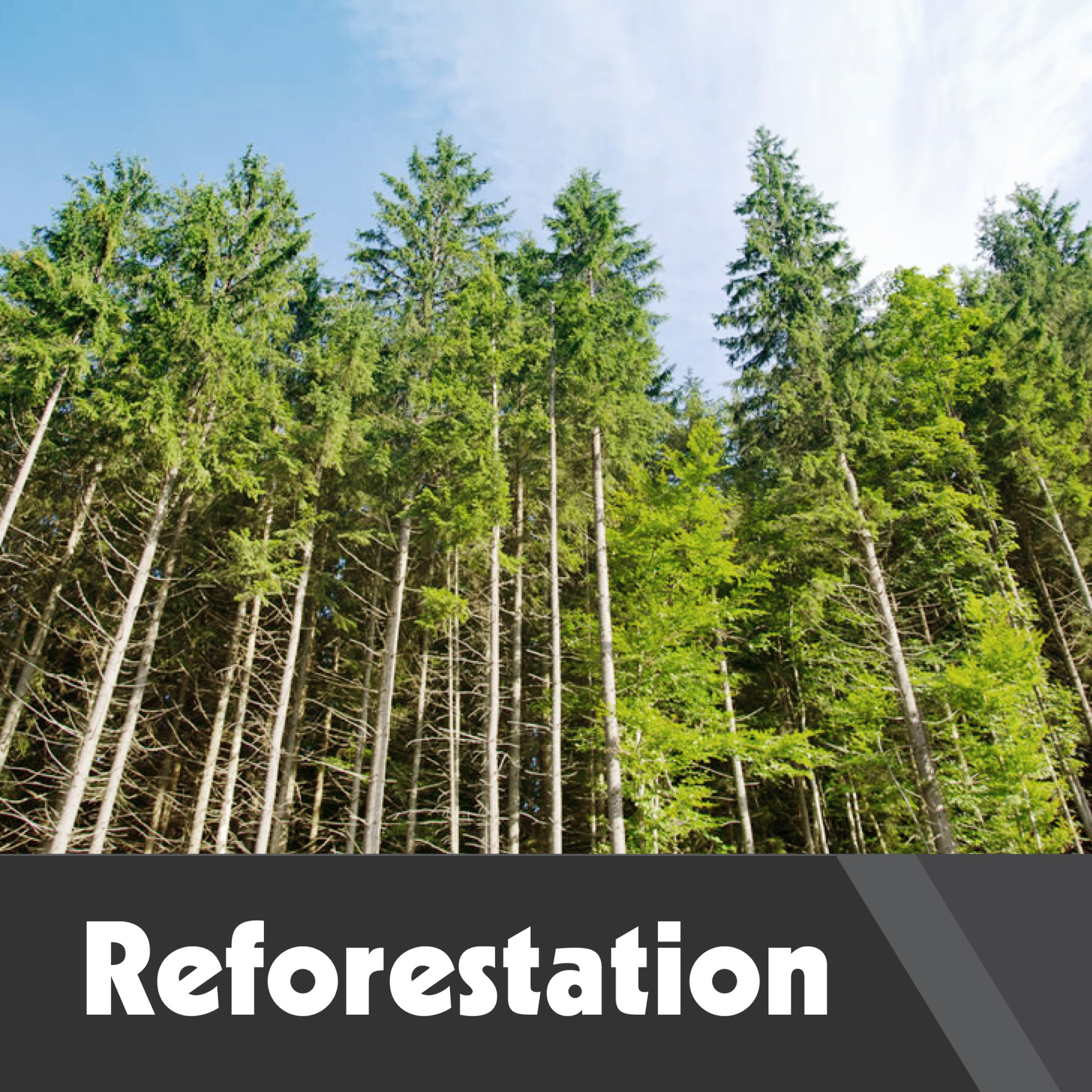 """save forests Global intervention in tropical forests to combat climate change could  the world  resources institute, agrees: """"if you want to stop deforestation,."""