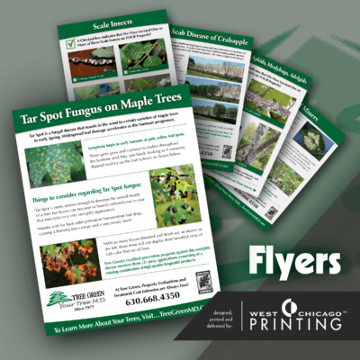 Tree Green Testimonial Pics 2 Printing Service West Chicago